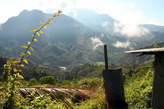 Kinabalu National Park 2
