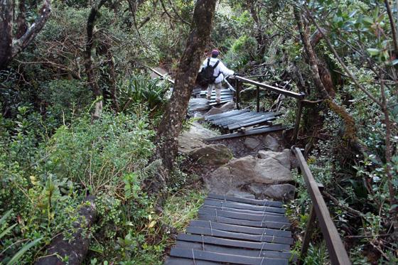 Kinabalu National Park 3