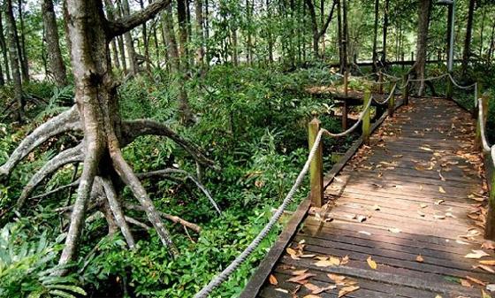 Taiping Matang Mangrove Swamp