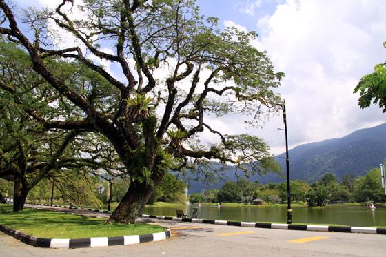 Taiping Taman Tasik 1