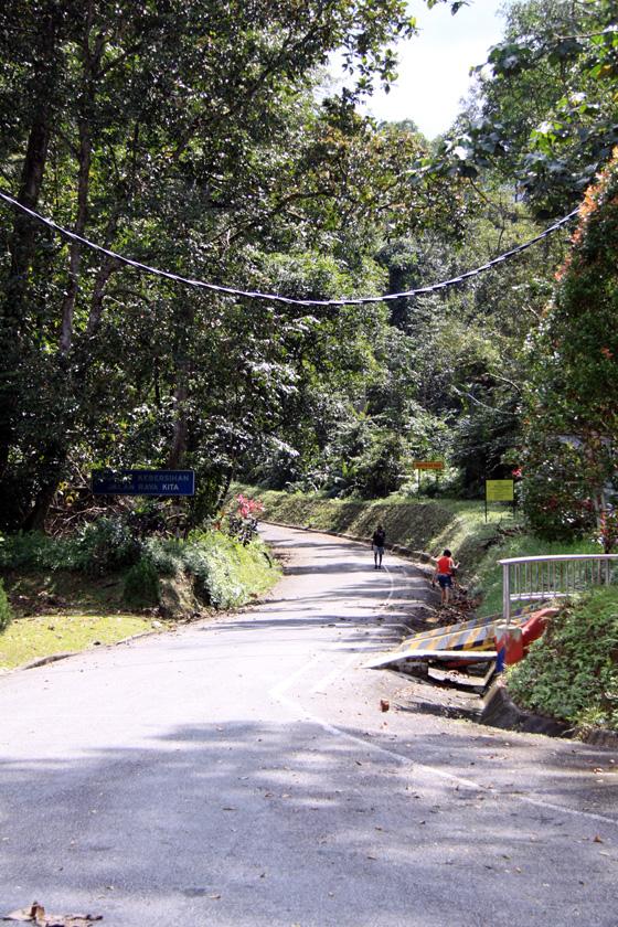 Bukit Larut (Maxwell Hill) 8
