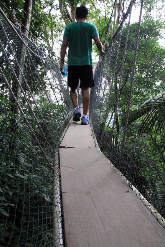frim canopy walkway 2