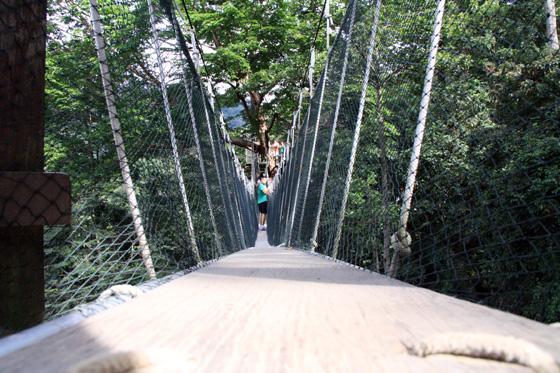 frim canopy walkway 7