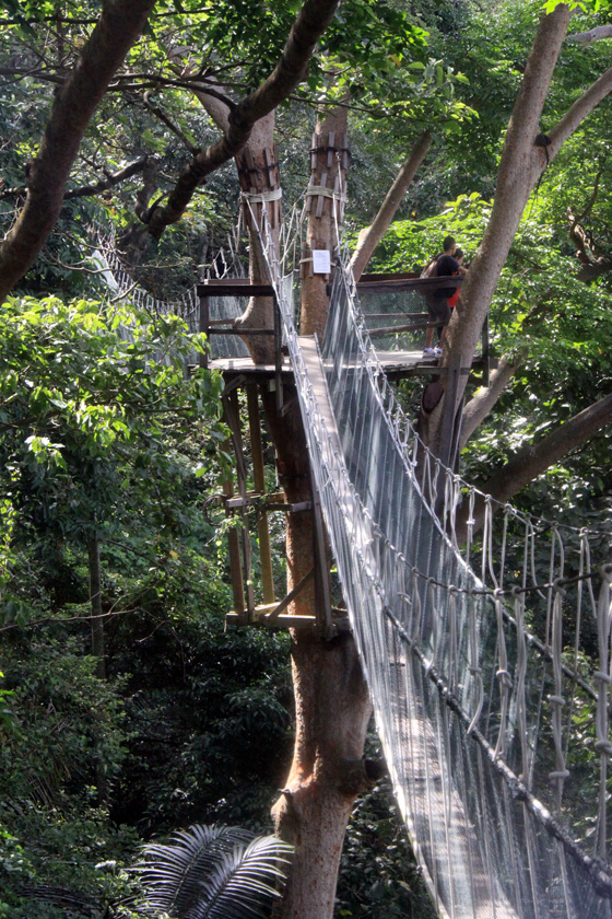 frim canopy walkway 8
