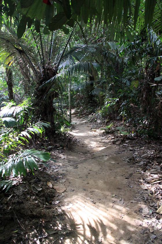 frim jungle path
