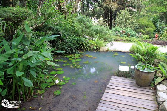tropical spice garden penang 10