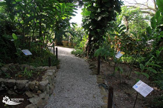 tropical spice garden penang 7