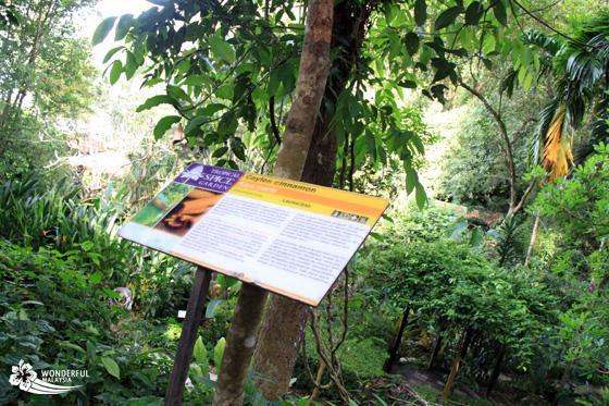 tropical spice garden penang 8