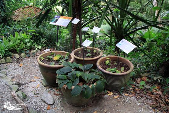 tropical spice garden penang 9