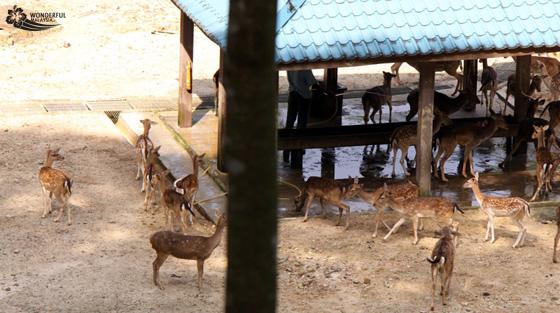 deer park lake gardens