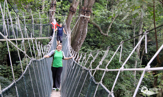fun at frim canopy walk