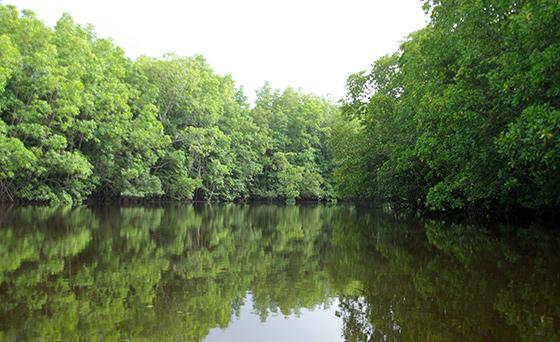 cherating-river-cruise-1