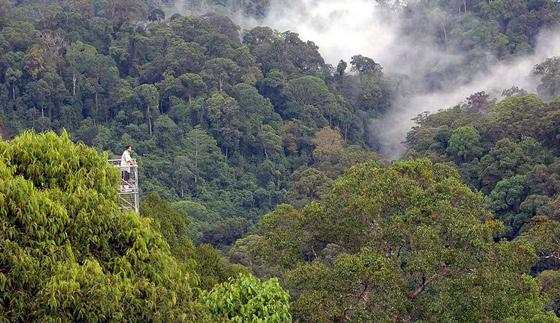 brunei-oerwoud