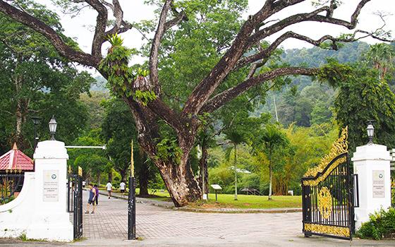 botanic-gardens-penang-1
