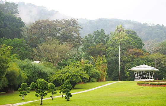 botanic-gardens-penang-5