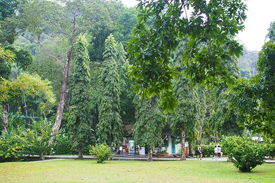 botanic-gardens-penang-7