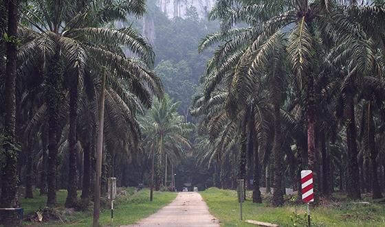 charah-caves-pahang-malaysia-1