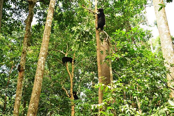 sunbear-malaysia-3