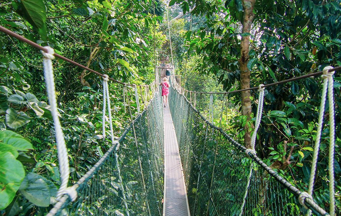 Taman Negara Tropical Rainforest