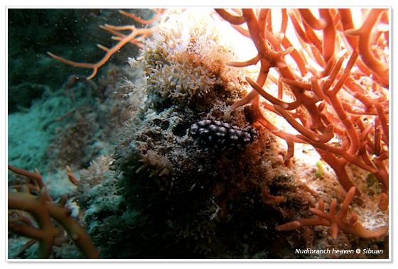 Diving at Sibuan Island in Malaysia