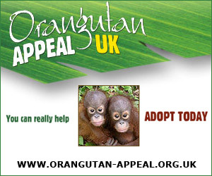 Free advertisement for orangutan-appeal.org.uk