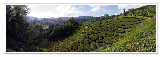 Cameron Highlands Panorama 1