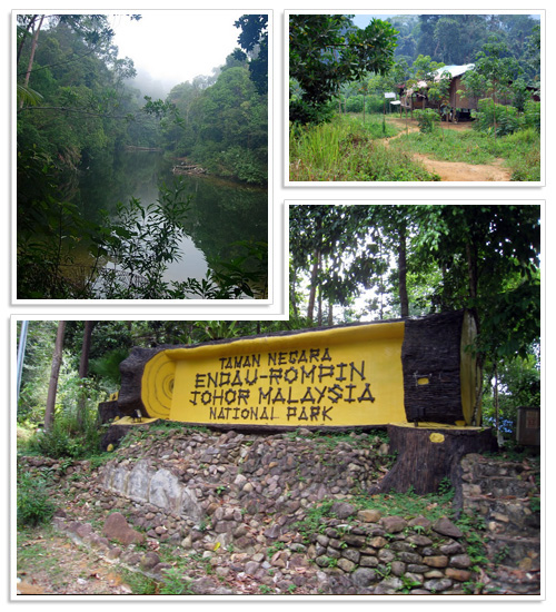 Endau-Rompin National Park 3