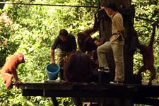 Orangutan Wildlife Center in Sepilok Sabah