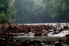 River at Taman Negara National Park