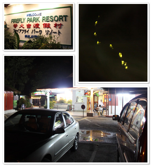 Firefly tour at Kuala Selangor