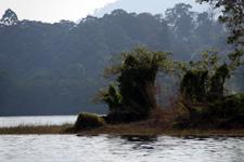 Vegetation at Lake Kenyir