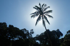 Nice tropical vibe at Perhentian Island