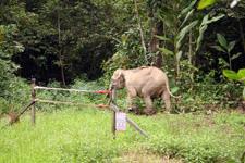 KJC Jungle Camp elephant trespassing