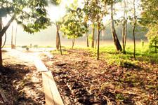 Morning sunrise at Kinabatangan River