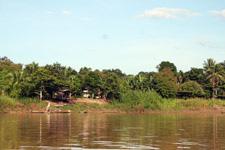 Kinabatangan River 4