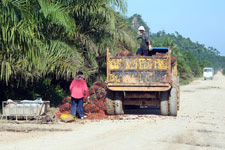 Truck carrying palm oil seeds