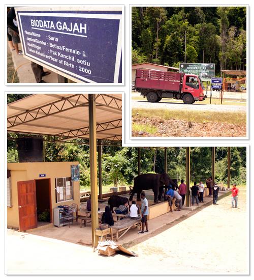 Sungai Ketiar Elephant Sanctuary 1