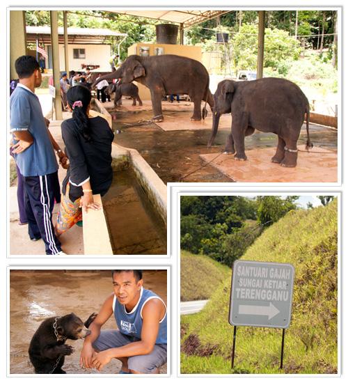 Sungai Ketiar Elephant Sanctuary 2