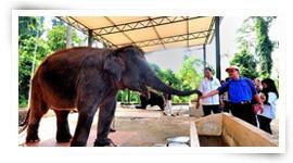 Sungai Ketiar Elephant Sanctuary