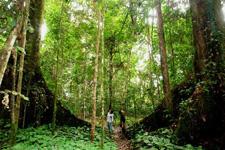 Tawau Hills National Park
