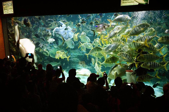 kids-travels-klcc-aquarium